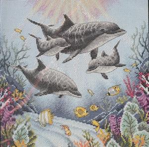 Dolfijnen in de morgen