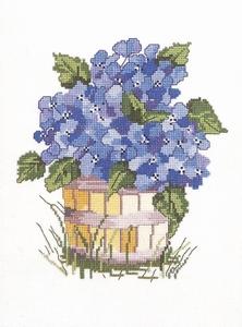 blauwe hortensias
