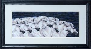 Witte paardenkudde